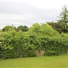 Retreat Road Manor, Athlone, Westmeath