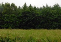 35 Acres Forestry, Gaulmoylestown, Mullingar, Westmeath