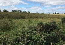 Cranleybeg, Granard, Longford