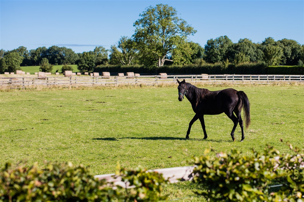Blackwater Stud, Clonguiffen, Enfield, Co. Meath – approx. 62 acres