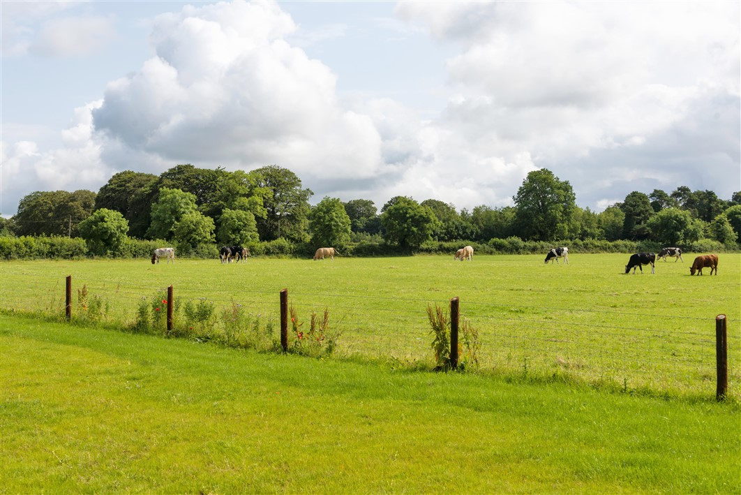Clogheraun Brook, Staplestown, Donadea, Kildare