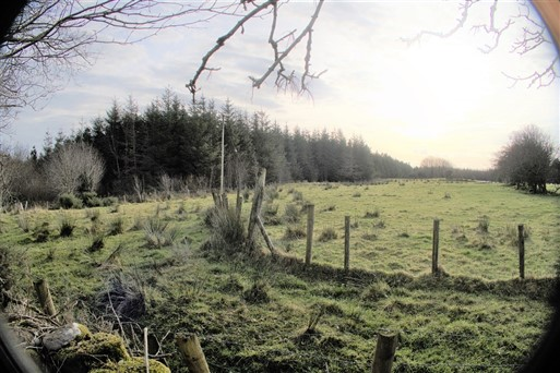 C. 38 Acres Forestry For Sale, Killadeer Ballyheane, Castlebar, Co. Mayo