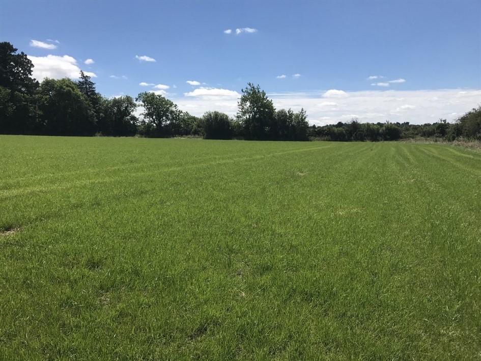 Ballymotey More, The Ballagh, Enniscorthy, Co. Wexford