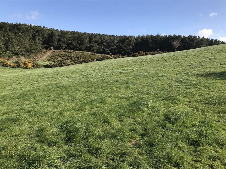 Ballyconnigar, Blackwater, Enniscorthy, Co. Wexford