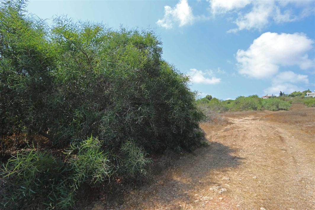 LCAP127, Cape Greko