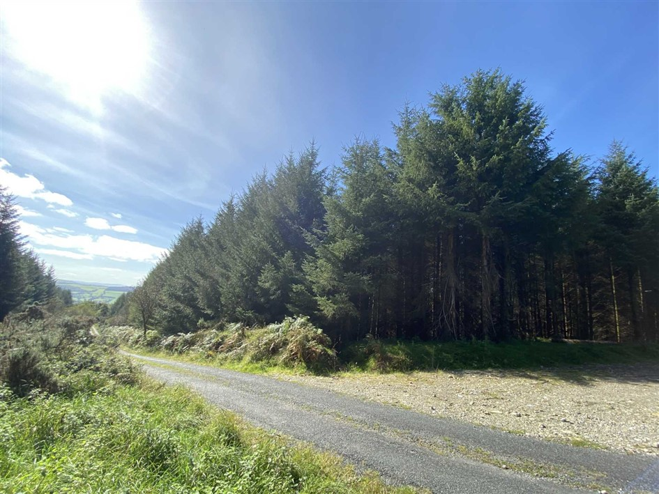 Forestry at Boolabrien Upper, Ballymacarbry